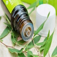 Топ-5 застосувань масла чайного дерева
