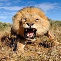 10 найшвидших тварин у світі
