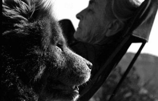 6. Джорджия О'Киф и ее собаки