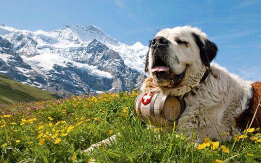 Счастье Швейцария