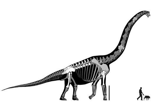 Техас: Paluxysaurus jonesi