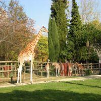 Найкращі зоопарки у світі