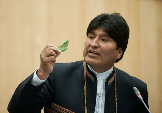 Президент Боливии с кокой