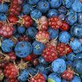 Топ-7 самых полезных ягод