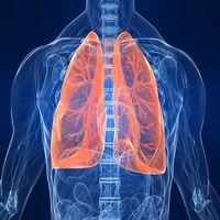 Найкращі продукти для очищення легенів