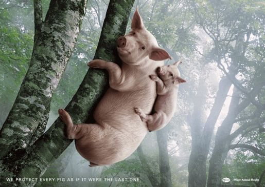 Pfizer Animal Health реклама