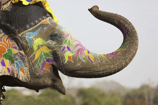 Фестиваль слонов, Джайпур, Индия