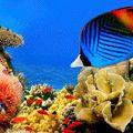 Місця, ідеальні для підводного плавання