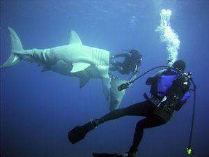 Незвичайні знахідки у шлунках акул