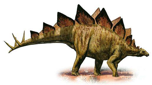 Колорадо: Стегозавр Арматус