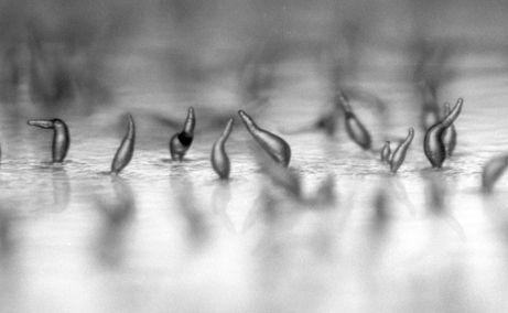 Амеби у скрутних умовах