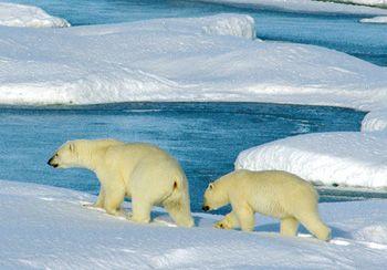 Таяние арктического льда