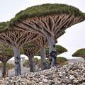 Самые красивые леса планеты