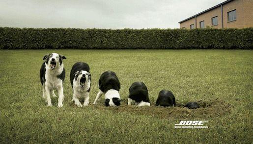 Bose реклама