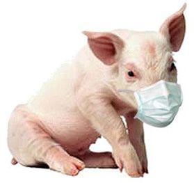 Опасаются ли украинцы свиного гриппа: опрос