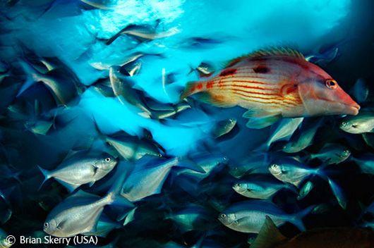 Браян Скеррі (США) – «Море життя»