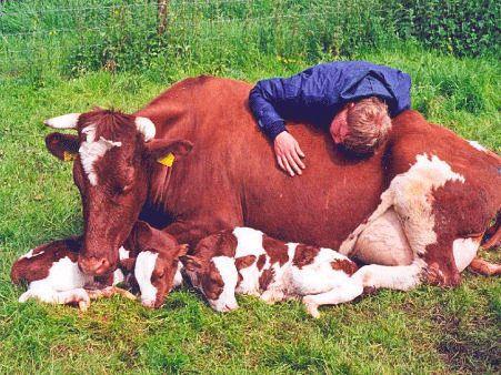 Нидерланды животные