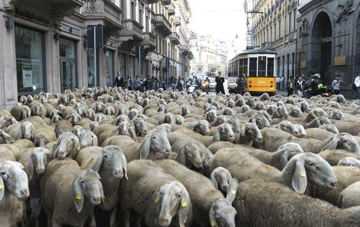 Милан пробки