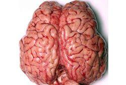 Замена части мозга