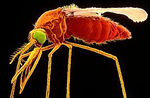 Создана первая в мире вакцина против малярии.