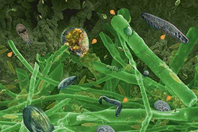 «Мікробіологія струмка: Життя у біоплівці»