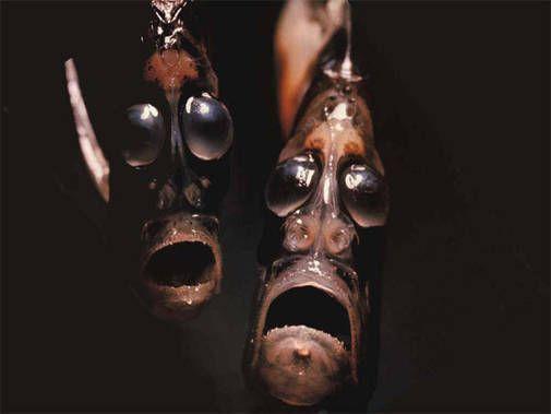 Глубоководная рыба-топор