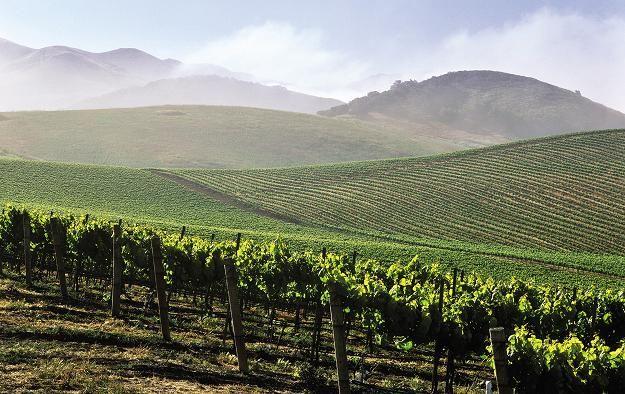 Каліфорнійські виноградники