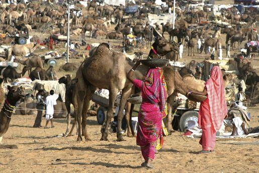 Ярмарка верблюдов (The Pushkar Fair)