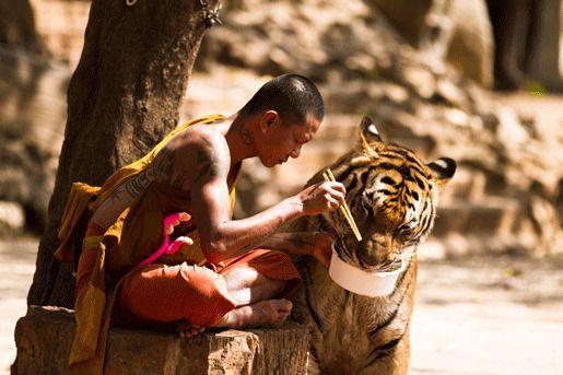 Бутан тигр животные