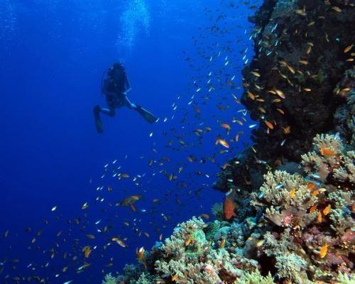 Египетское Красное море