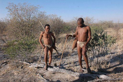 Ботсвана процветающая