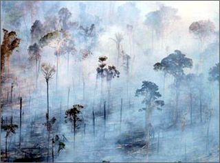 Страны-рекордсмены по уничтожению лесов