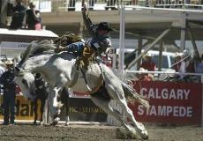 Родео Calgary Stampede